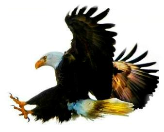eaglewings