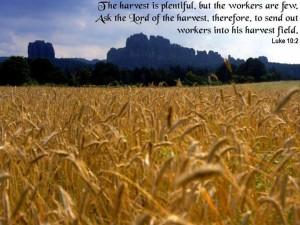 harvest image
